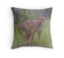 Cheetah marking territory - Moremi Botswana Throw Pillow