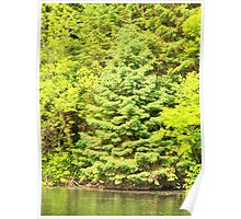 Apple River Trees Poster