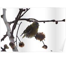 Birdie 7933 Poster