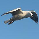 Sea Gulls by KiriLees