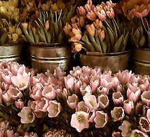 Tulip Tones by Jessica Jenney