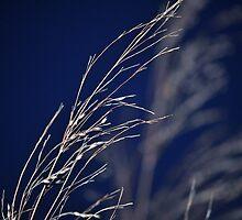 Blue Grass by MaryLynn