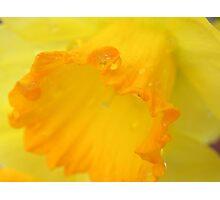 Macro Daffodil Photographic Print