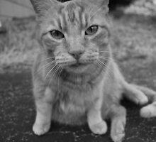 El Gato 2 by Chris Price