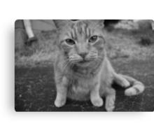 El Gato 2 Canvas Print