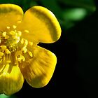buttercup... by Michelle McMahon