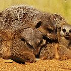 Family Snuggles !  by MichelleRees