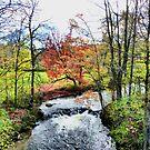Autumn Painting by Deborah  Benoit