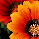 vibrant flowers.. by Michelle McMahon