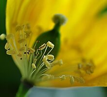 yellow.. by Michelle McMahon