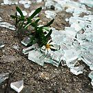 Broken Glass, Broken Flower by pange