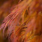 Autumn tones by Chris Dowd