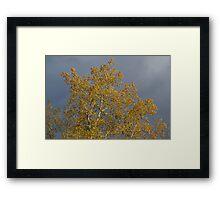 Fall Upstate NY Framed Print
