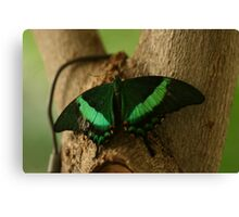 A Blink of Emerald Canvas Print