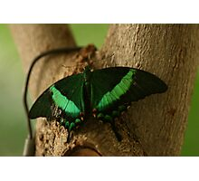 A Blink of Emerald Photographic Print