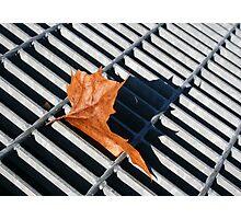 Grate Leaf Photographic Print
