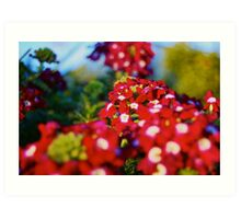 Red Flower Patch  Art Print