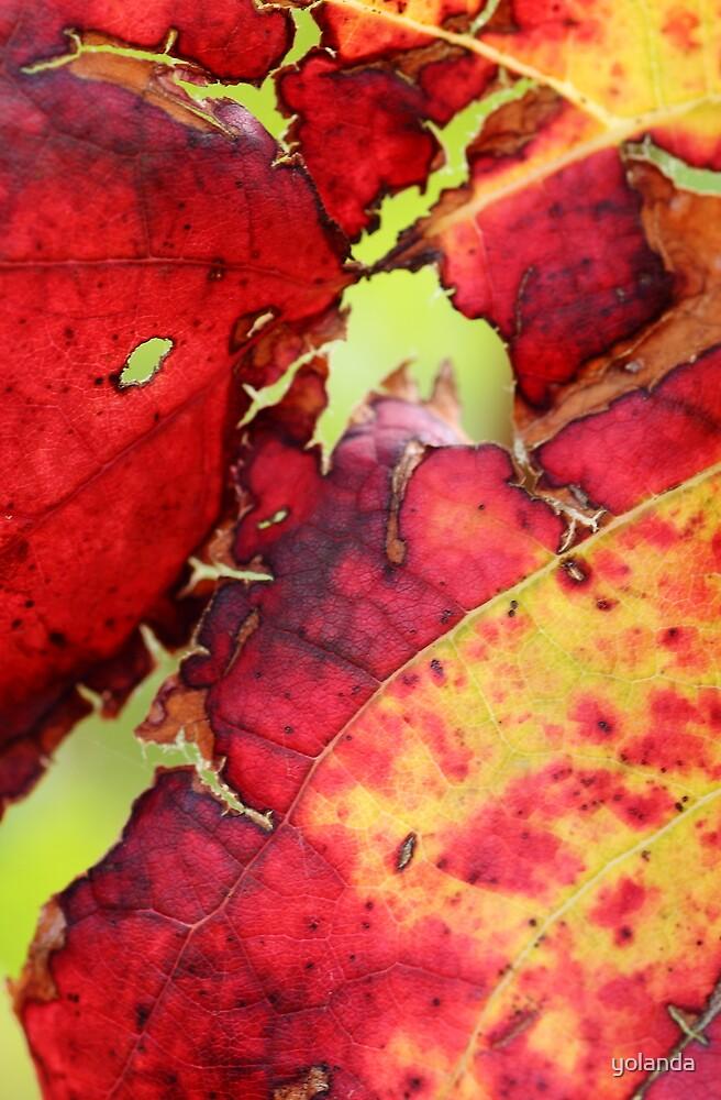 Autumn Vine by yolanda