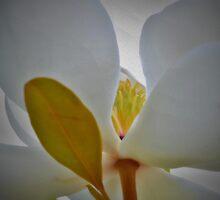 Heart of Magnolia by seeyoutoo