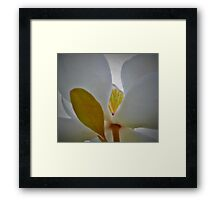 Heart of Magnolia Framed Print