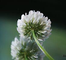 Clover Flower by Mattie Bryant