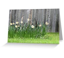 Doffodils along the Fence Greeting Card