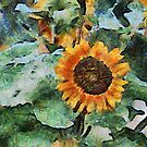 A Touch of the Sun by Pat Moore