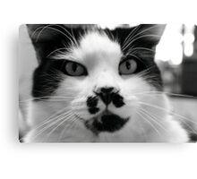 Domestic Cat - Chicco Canvas Print
