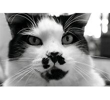 Domestic Cat - Chicco Photographic Print