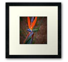 Exotic Flower- Bird of Paradise Framed Print
