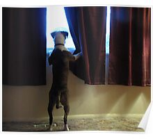 Buster Waits For Dad Poster