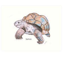 Tortoise watercolour illustration Art Print
