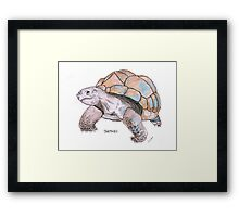 Tortoise watercolour illustration Framed Print