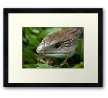 The Blue Tongue Framed Print