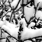 Snow-close up by Peter Simpson