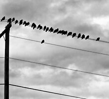 Birds on Wires by KathrynSylor