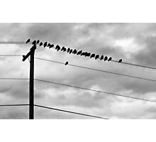 Birds on Wires Photographic Print