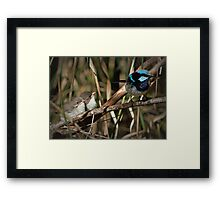 Where's Lunch Daddy? Framed Print
