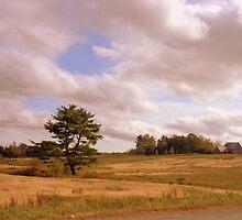 Lone Pine by murrstevens