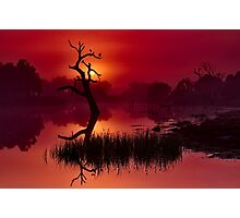 """Merlot Dawn"" Photographic Print"