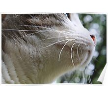 Just a whisker away Poster