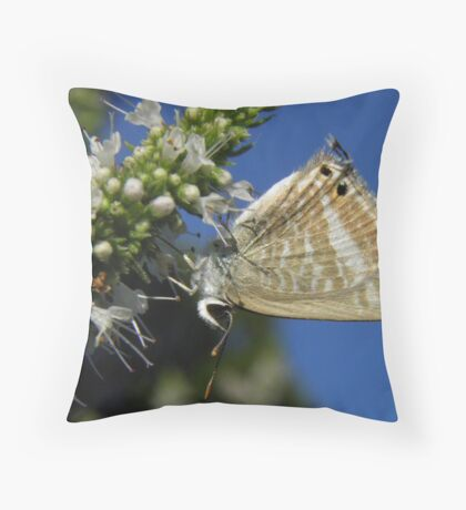Long-tailed Pea-blue Butterfly (Lampides boeticus) Throw Pillow