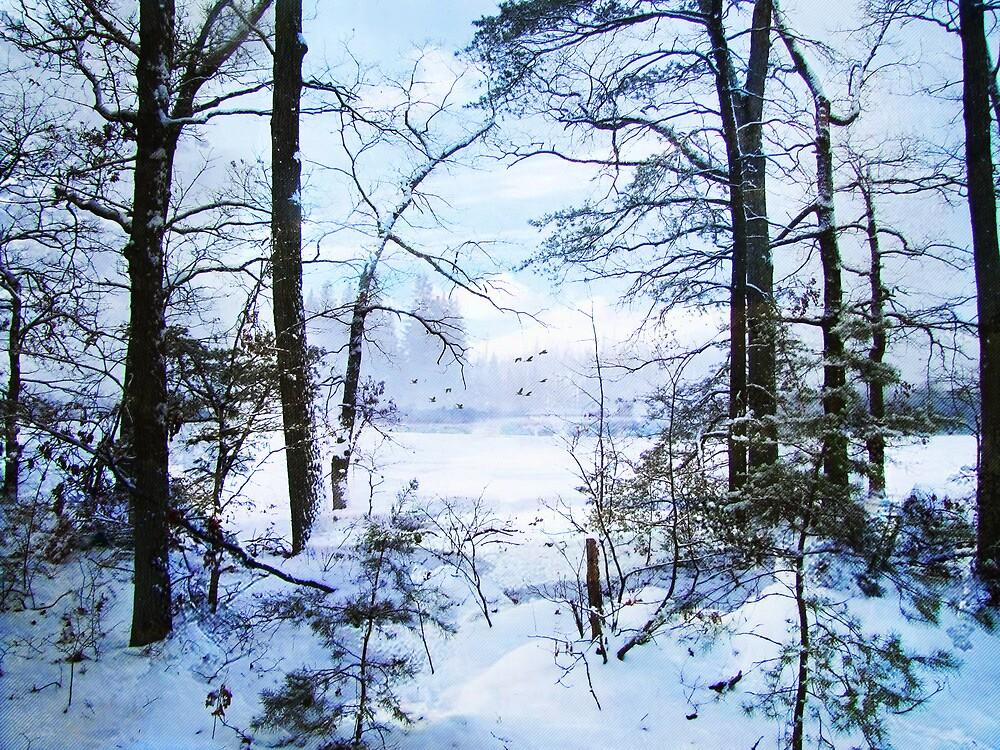 Winter's Beauty by John Rivera