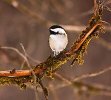 Sitting in a tree by Josef Pittner