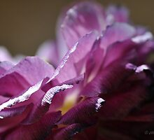 Fading beauty by Denise Couturier