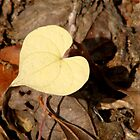 ♥ Leaf Like a Heart ♥ by Jean Gregory  Evans