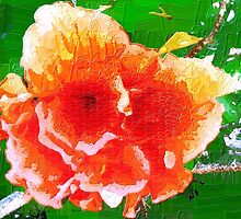 Splendid hibiscus by ♥⊱ B. Randi Bailey
