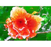 Splendid hibiscus Photographic Print
