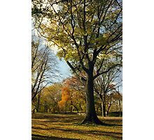 Central Park in Autumn, New York City  Photographic Print