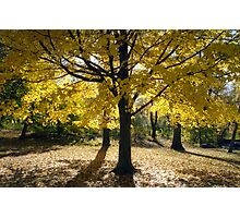 Central Park Autumn, New York Photographic Print